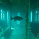 Искусственные рифы или как умирают вагоны нью-йоркского метро