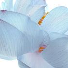 Жизнь в цвете: белый