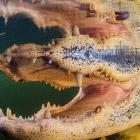 Лицом к лицу с крокодилом