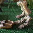 Как реставрируют динозавров