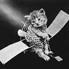Кошки как люди. 100 лет назад