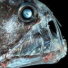 Самые страшные в мире морские существа
