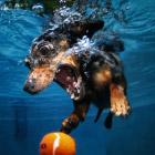 Удивительные подводные собаки. Часть 2