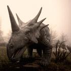 Забытая страна чудес: заброшенные парки развлечений
