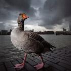 Победители Британского конкурса дикой природы 2014